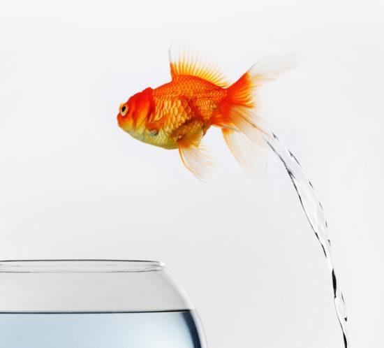 Age UK Goldfish Insurance Direct Mail